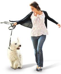 Dicas e Cuidados com o seu Cão