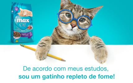 Alimentação dos gatos: necessidades nutricionais