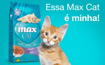 Tipo de ração para gato: diferentes sabores e indicação