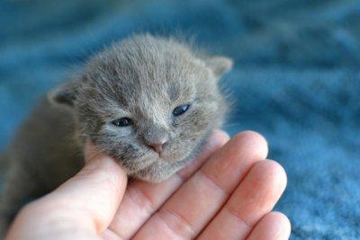 Cuidados para adotar gato recém-nascido