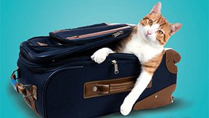 Viagem programada, passaporte nas mãos e nas patas