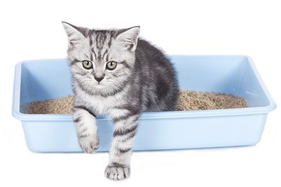 Gatos com diarreia: causas e tratamento