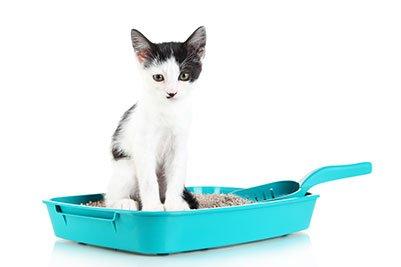 Veja como escolher a melhor areia higiênica para gatos