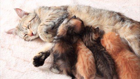 Gestação felina: quais cuidados devo ter?