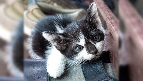 5 vídeos engraçados de gatinho para não segurar o riso