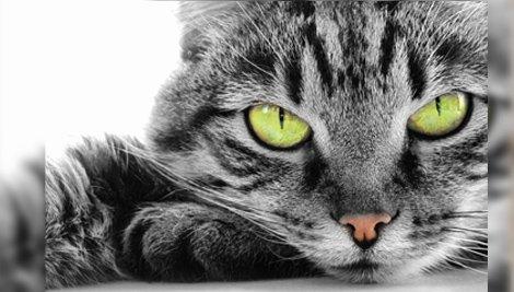 Entenda como funciona a visão dos gatos