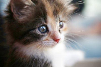 Por que gatos ronronam?
