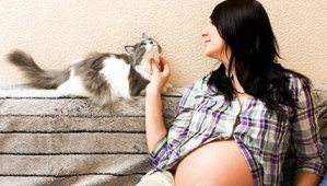Grávidas e os gatos: existe perigo nessa relação?