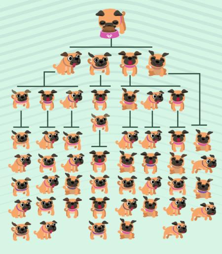 infográfico mostrando a reprodução de cachorros