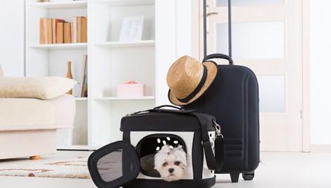 Cão na mala