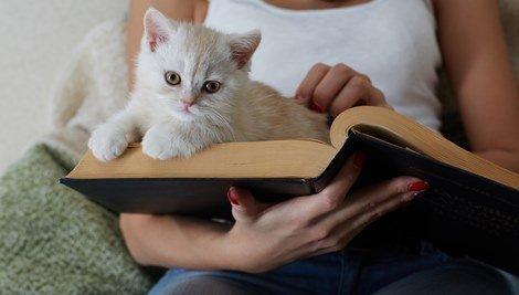 10 cosas que a los gatos no les gusta que hagas