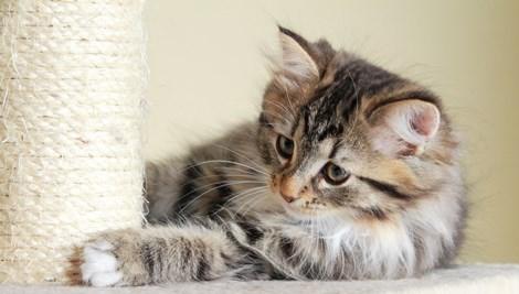 gato catnip